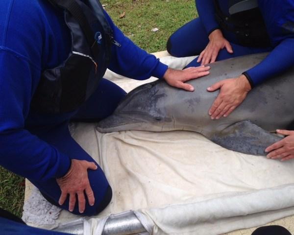 Dolphin Rescue 1_174690