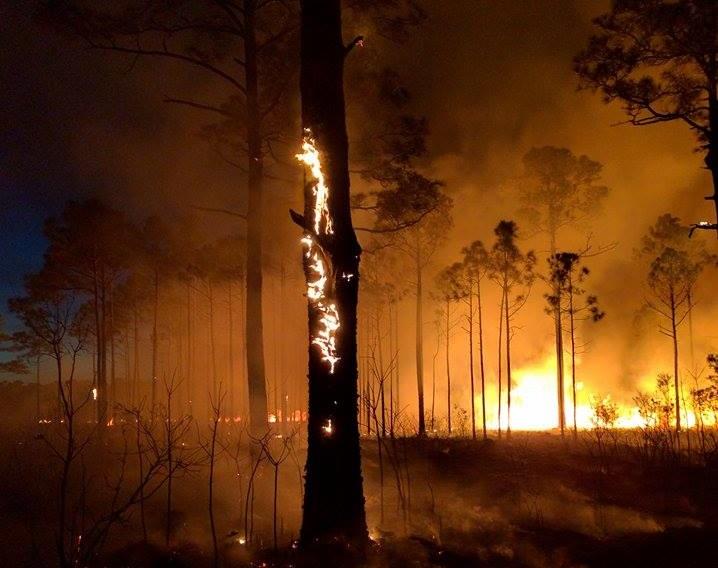 Heron Bay Fire 1_165589