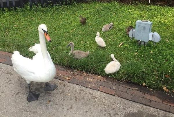 swan punch_213474