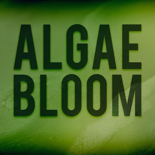 algae bloom_385958