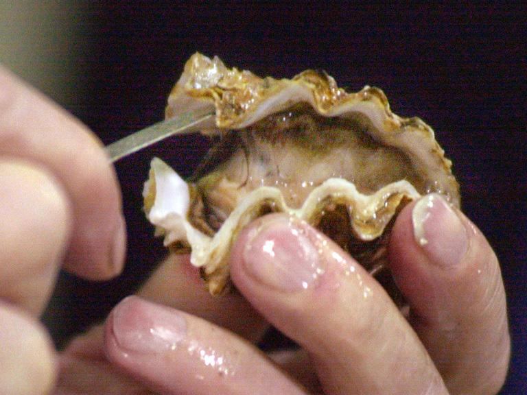 oyster_420290