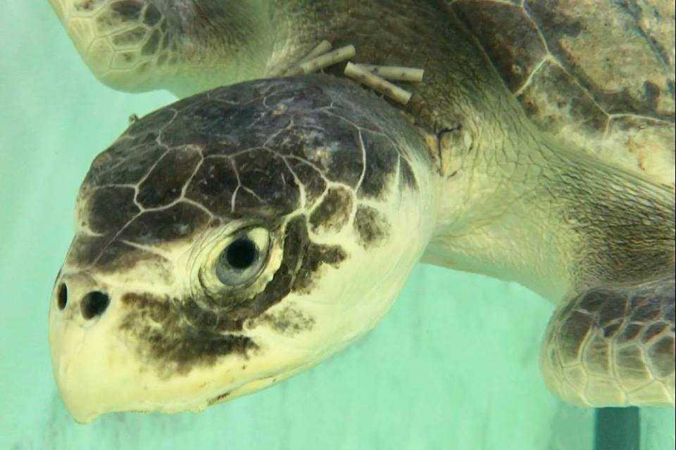 sea turtle 2_450333