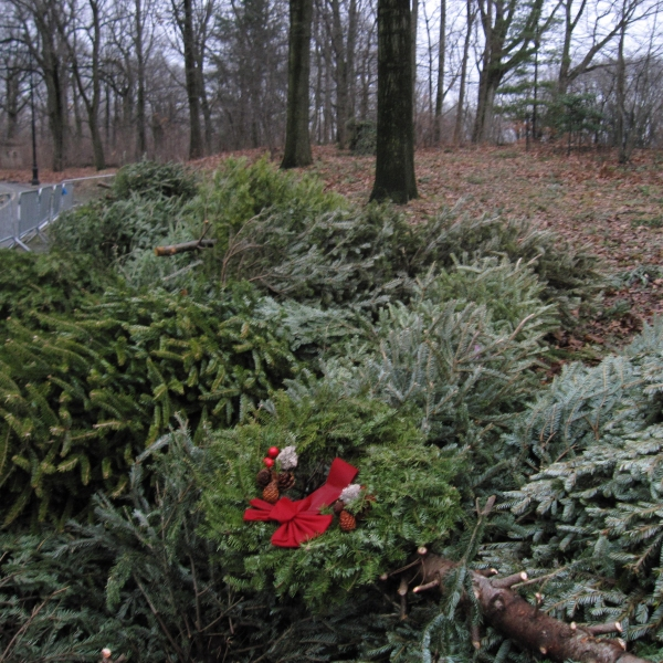 Holidays-Recycling Christmas Trees_468506