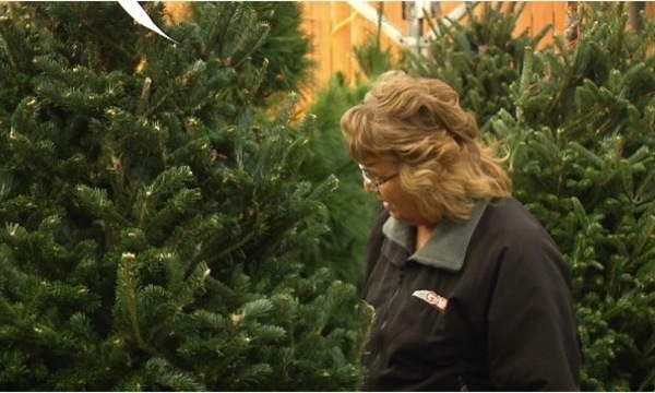 Christmas Tree Tips_1512357148286_29822209_ver1.0_640_360_456728