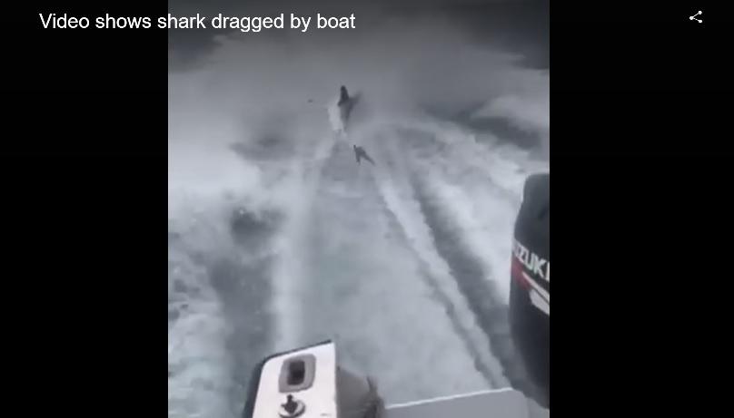 shark_383470