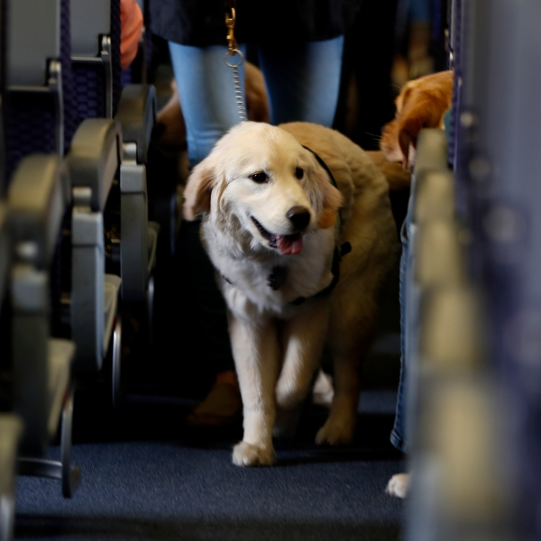 Animals on Planes_1516394052845