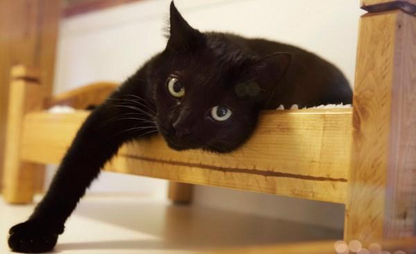cat_1521596798499.jpg