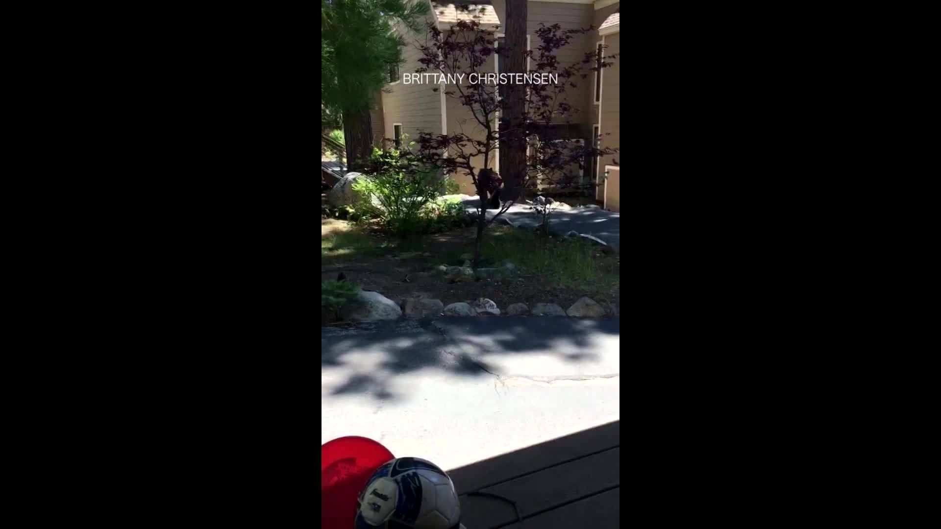 Mom shows bear in her yard who's boss