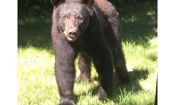 bear 1_1531010977967.jpeg.jpg