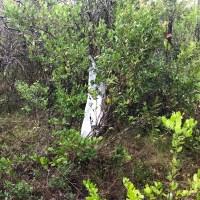plane crash 4_1530991848493.jpg.jpg