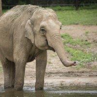 Elephant_1534040302454.jpeg