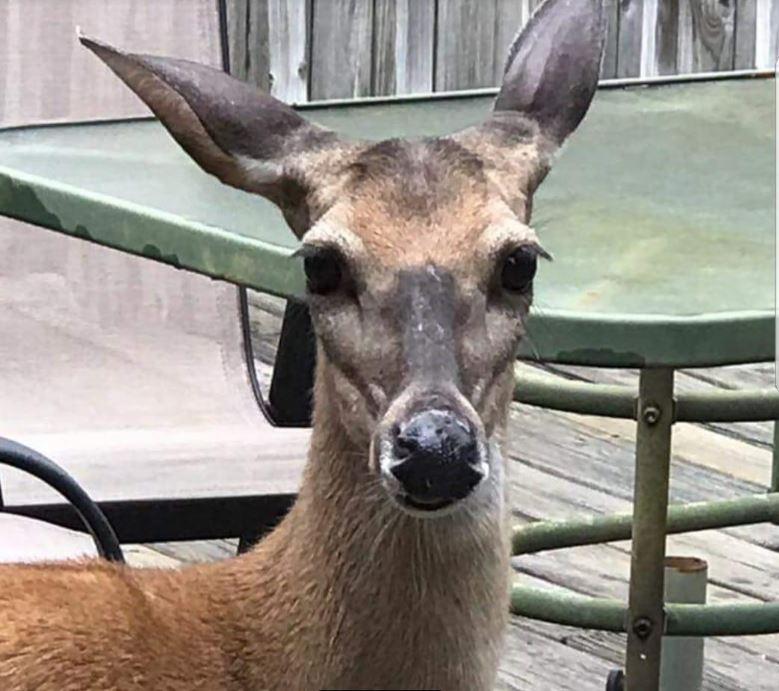 Katie the Deer_1533683601867.JPG.jpg