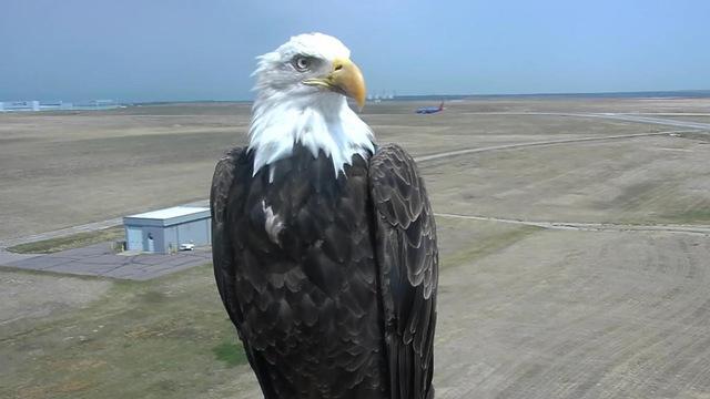 bald-eagle-selfie_1533216792397_50448351_ver1.0_640_360_1533266033006.jpg