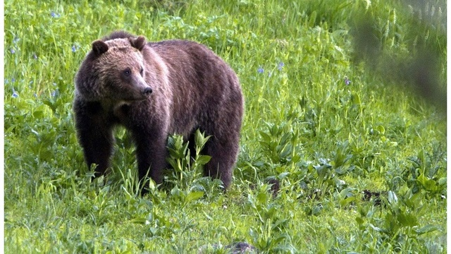 Hunting Grizzlies_1535145884693