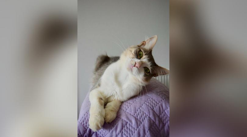 greek cats_1534210246518.jpg.jpg