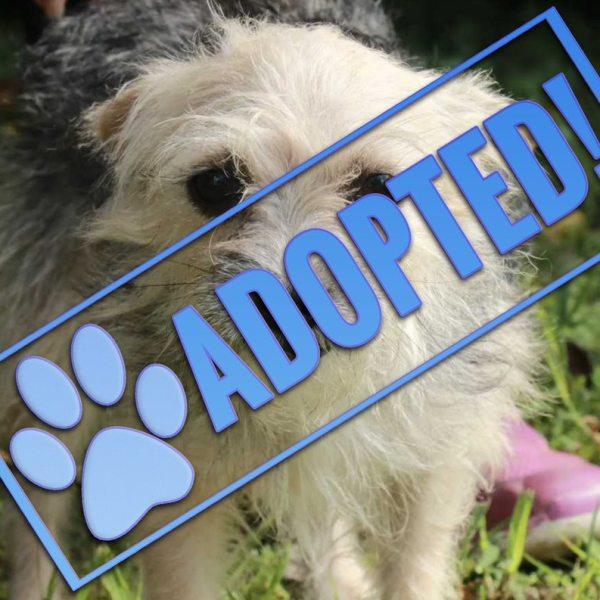 may adopted_1543251026046.jpeg.jpg