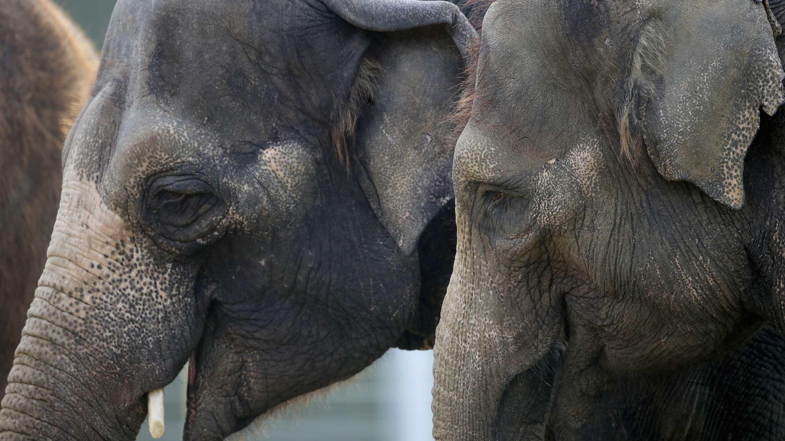 Group Files Appeal In Bid To Free Elephants From Petting Zoo