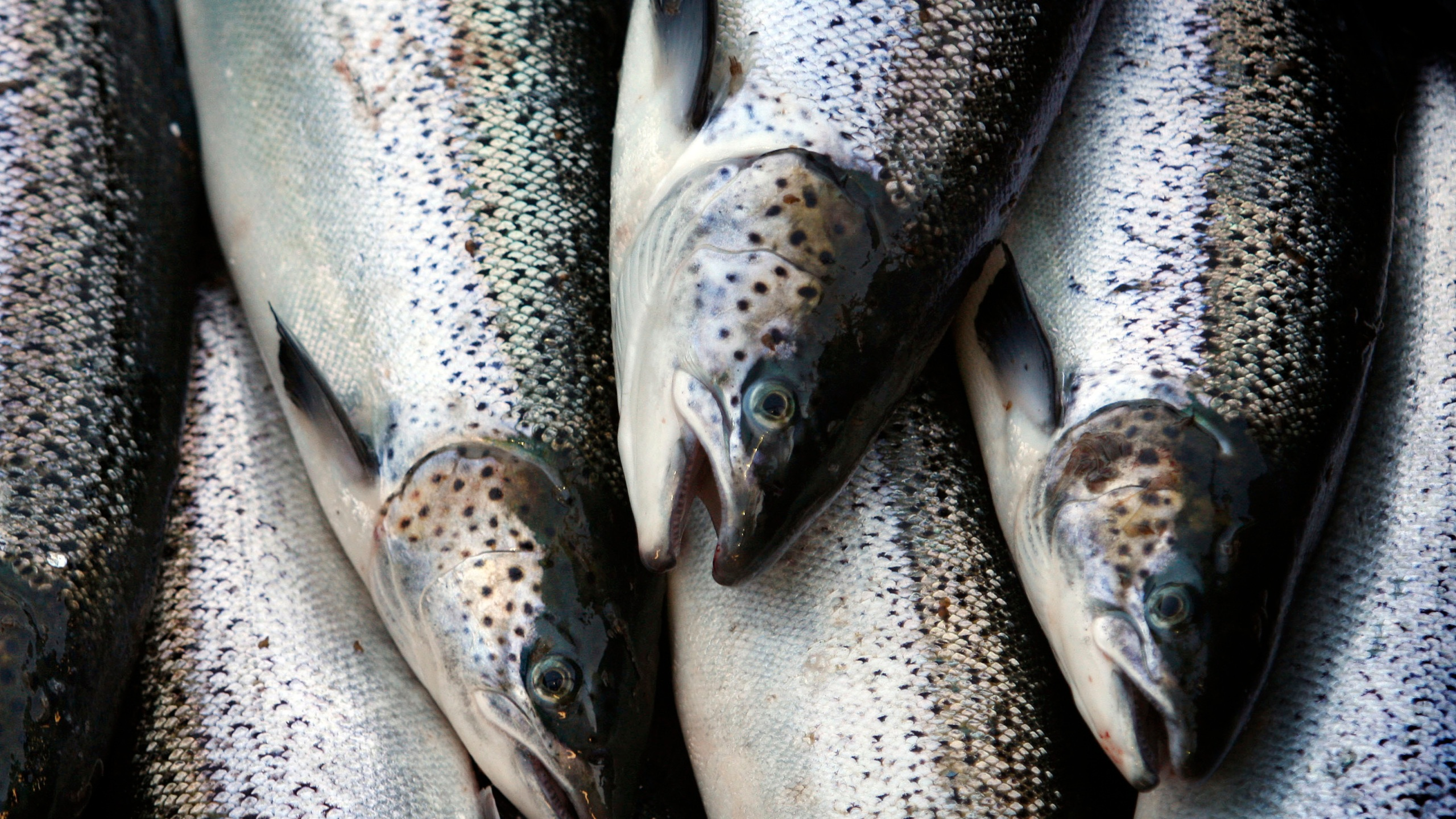 Seafood_Deficit_41528-159532.jpg18819988