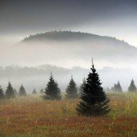 christmas tree_1536676289606.jpeg.jpg