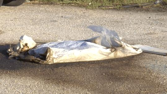 animal carcasses_1539012403822.PNG.jpg