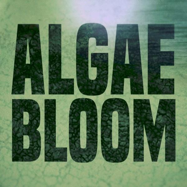 Algae bloom_385961