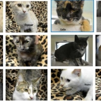 barn cat adoption_1540936005601.jpg.jpg