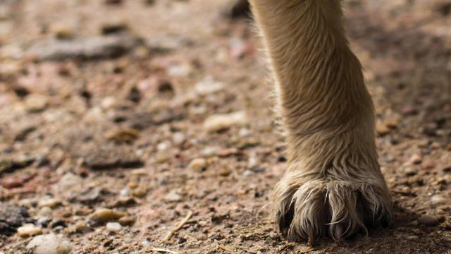 rabies-pets-dog-paw_1538411963042_404640_ver1.0_57731780_ver1.0_640_360_1538739533735.jpg
