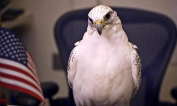 Air_Force_falcon_mascot_injured_during_p_0_61135520_ver1.0_640_360_1541354148097.jpg