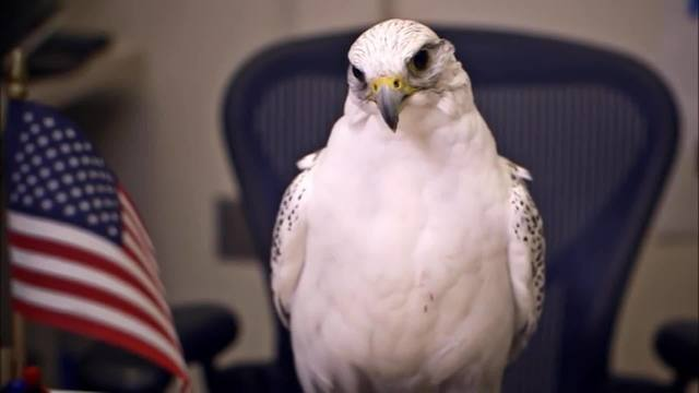Air_Force_falcon_mascot_injured_during_p_0_61135520_ver1.0_640_360_1541354148097.jpg