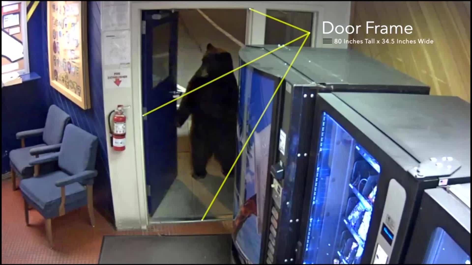 Bear walks into Police station