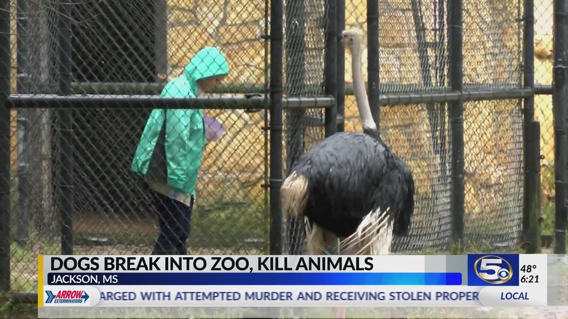 Feral_Dogs_Attack_Animals_at_Jackson_Zoo_0_20181111013541