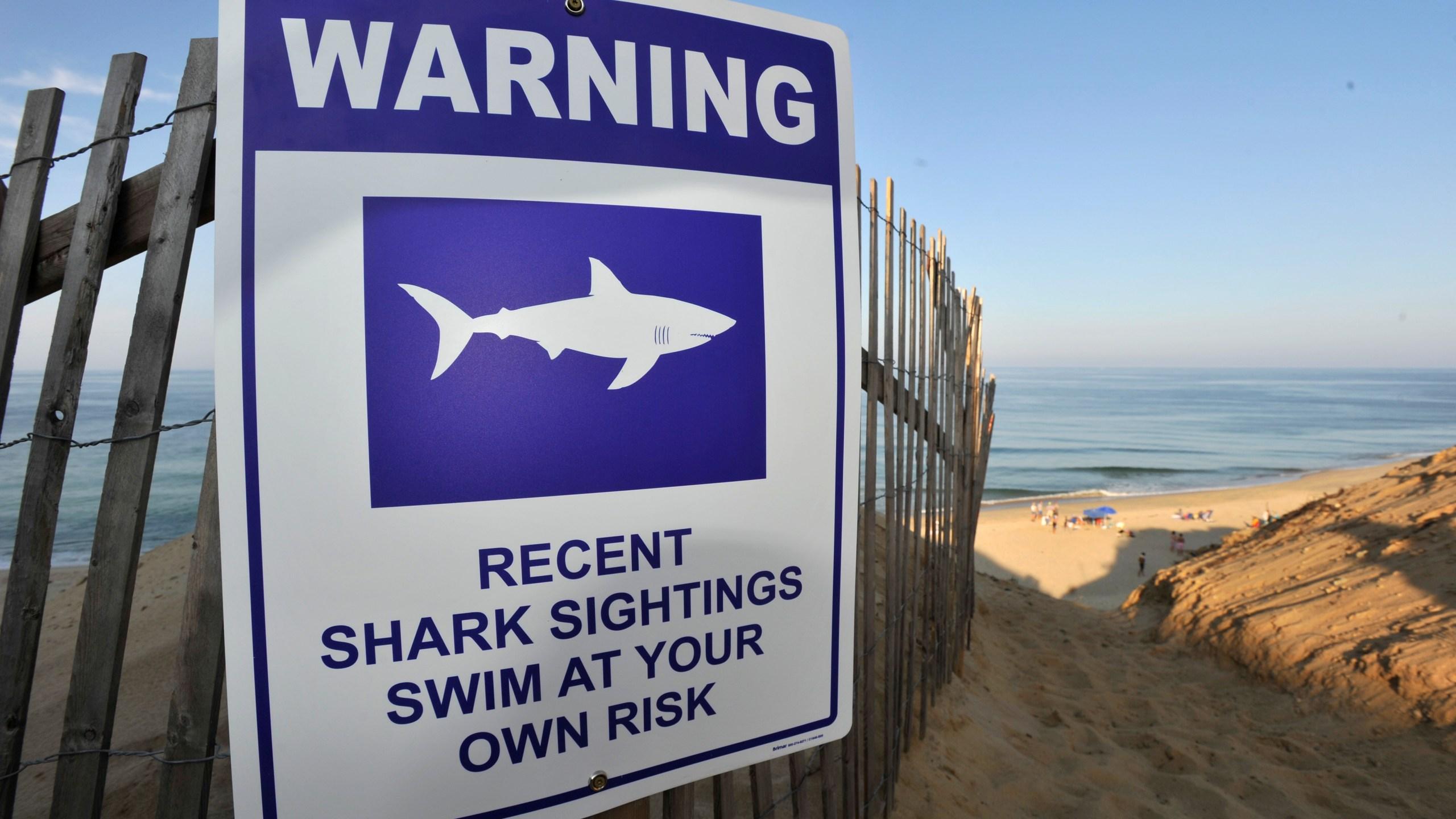 Shark_Attack_57207-159532.jpg84907753