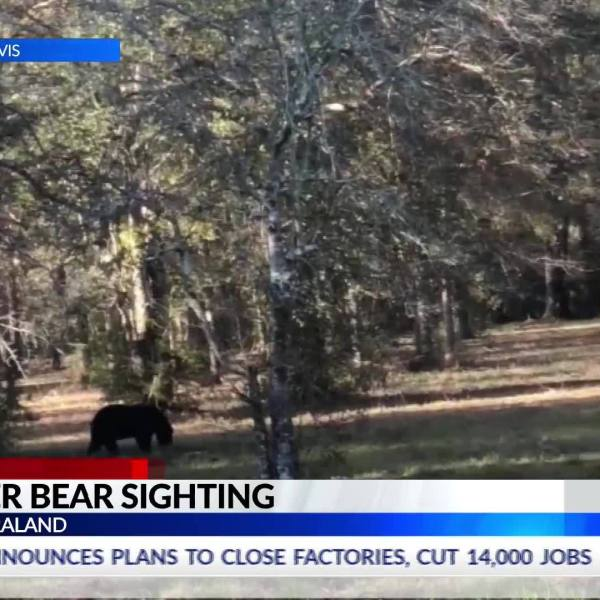 saraland_bear_sighting_6_20181128234149
