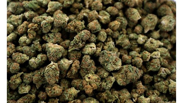 Marijuana Michigan News Guide_1543799690559