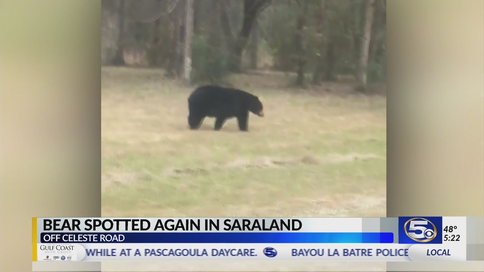 VIDEO: Bear spotted on Celeste Road in Saraland