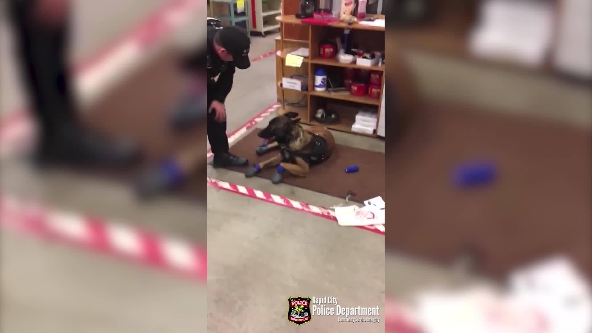 VIDEO: Police dog has trouble getting used to snow boots