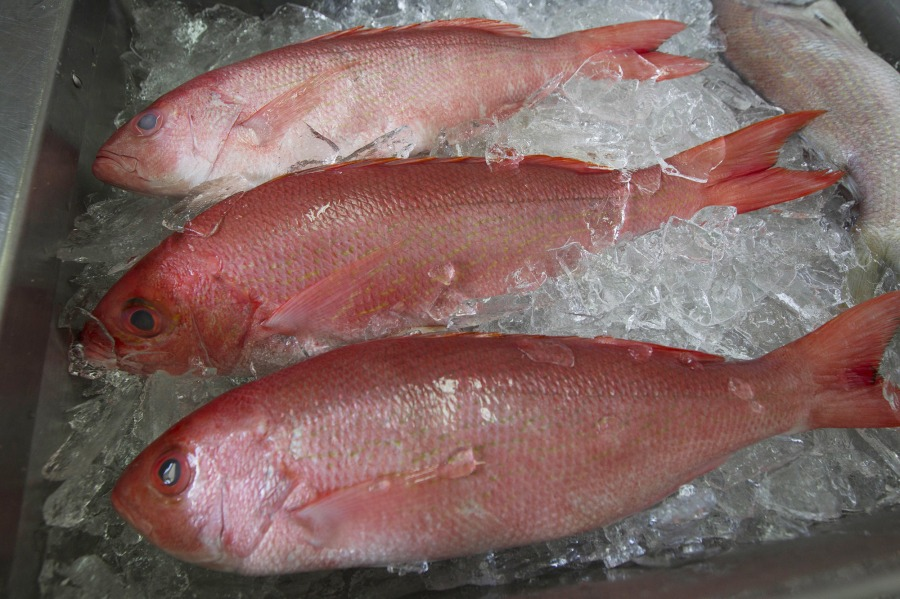 Red Snapper-Protests_1517609557717