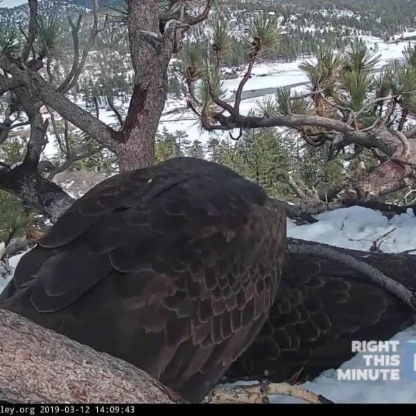 RTM Moment:  Big Bear Bald Eagle Nest Cam