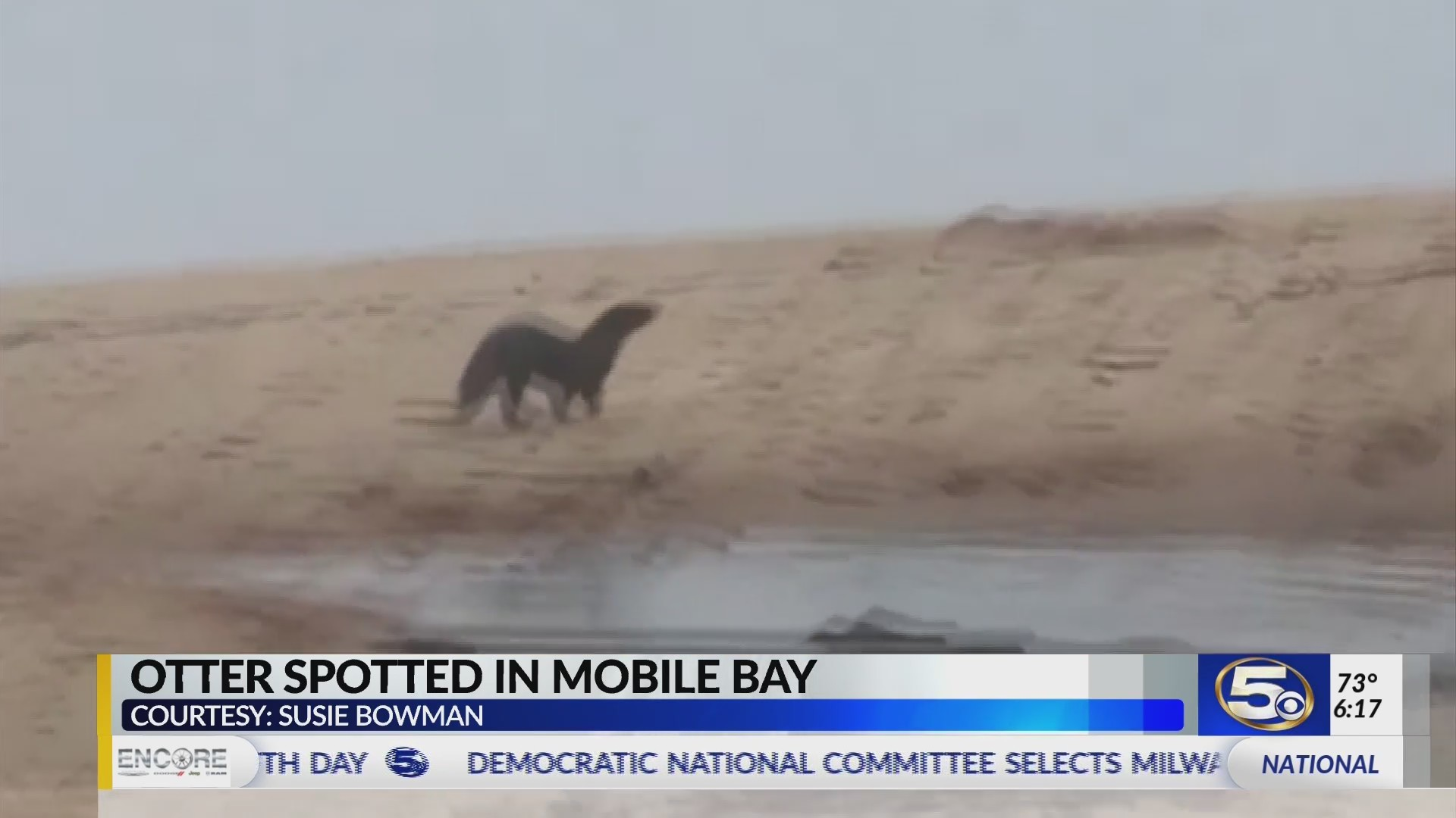 VIDEO: Caught on Camera - Otter Sighting in Mobile Bay