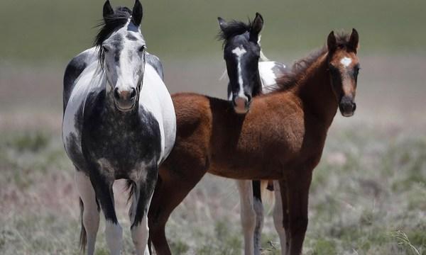 Wild horse_1552933390732.jpg_78004793_ver1.0_640_360_1552947870619.jpg.jpg