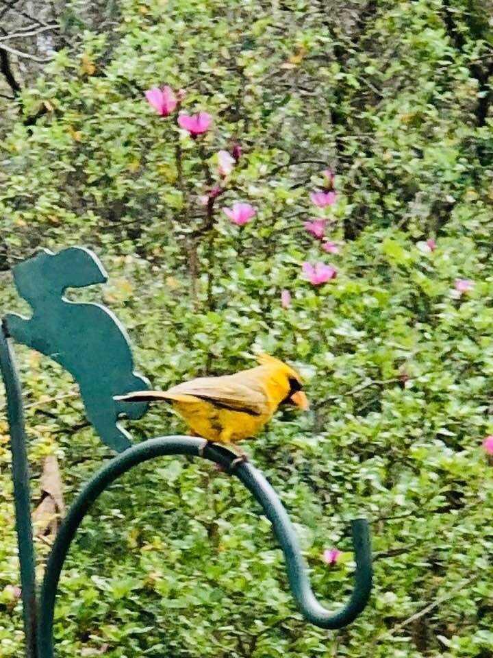 cardinal 4_1553010660276.jpg.jpg