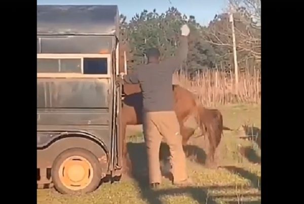 horse beating_1554076042652.jpg.jpg