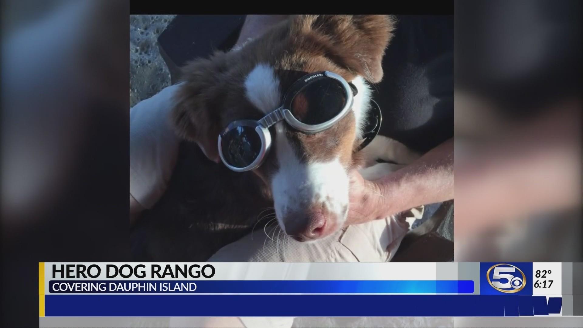 VIDEO:  Rango, Dauphin Island's alert hero dog