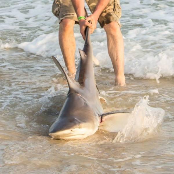 shark3_1554736113223.jpg