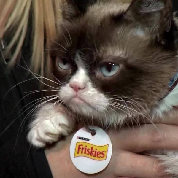 Internet sensation 'Grumpy Cat' dies at 7