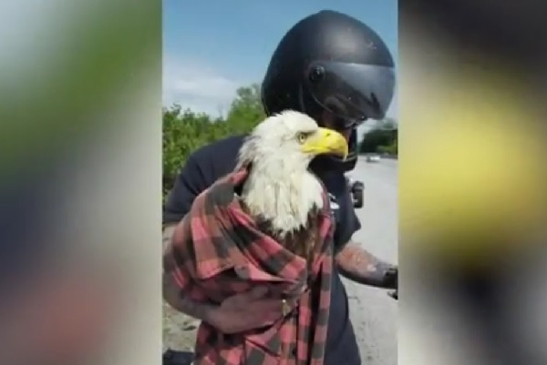 Take a look at that: Bald Eagle rescue, graduation and more