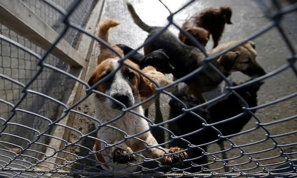 Serbia Prison Dogs_1557158191489