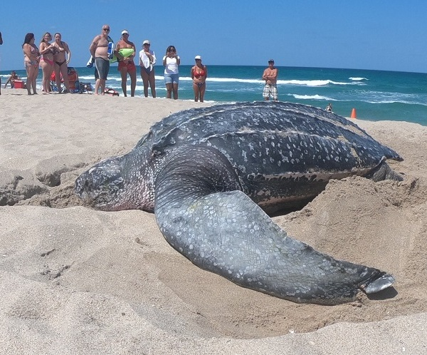 sea turtle_1558623310425.jpg-846652698.jpg