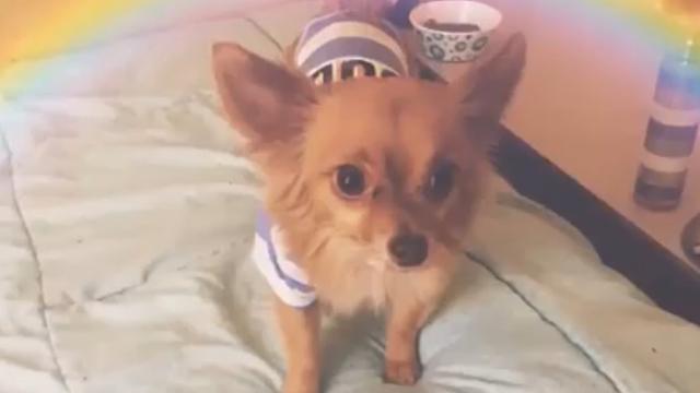 small dog_1557946989081.jpg.jpg