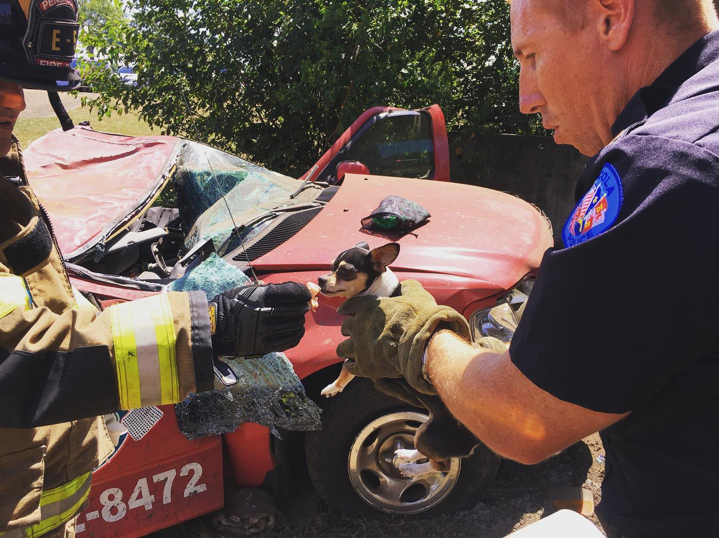 Terrified dog rescued from car crash in Pensacola